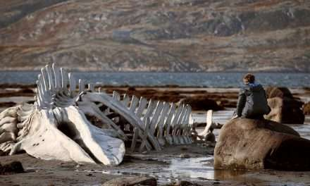 Her Devrin Filmi: Leviathan